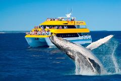 Best Value 3/4 Day SPIRIT OF HERVEY BAY Whale Watch Cruise